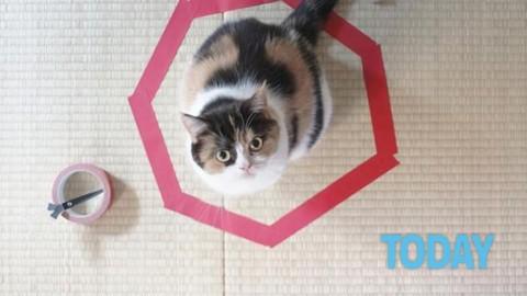 Il gatto si ammala di Aids, il Comune lo cura ma scoppia la polemica – Today