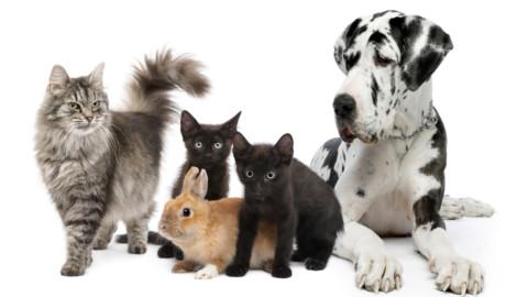 Enpa, boom di adozioni di cani e gatti nel triennio 2014-2016 … – Il Sole 24 Ore
