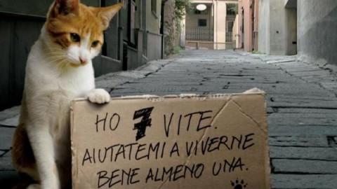 """""""Odio i gatti e gli animalisti"""": lasciata una lettera a fianco del micio … – L'Eco Vicentino (Comunicati Stampa)"""