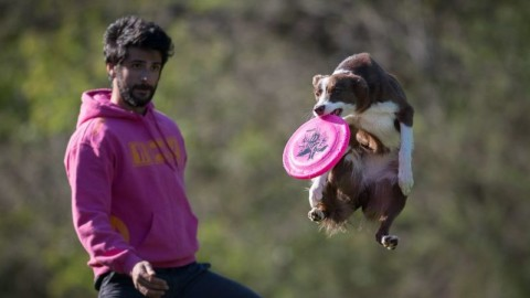 Dalla paura dei cani al terzo posto ai campionati italiani distance di … – AostaSera