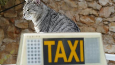 Taxi rifiuta di far salire cani e gatti: come fare – La Legge per Tutti