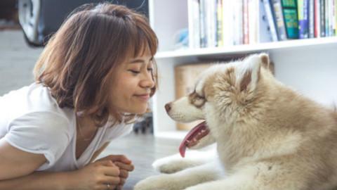Cani: 4 consigli per pulire le orecchie – GreenStyle