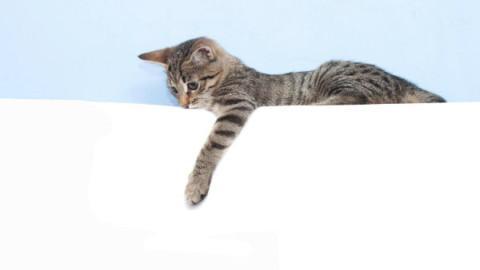 Il vostro gatto è mancino? Ecco come scoprirlo – National Geographic Italia