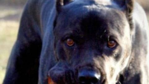 Portopalo, corriere catanese morso da cani muore durante consegna – La Sicilia