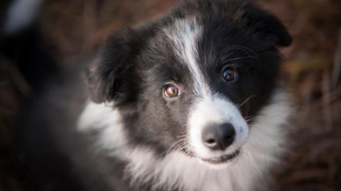 Soffrire per la morte di un animale è considerata una vera sindrome … – 105.net