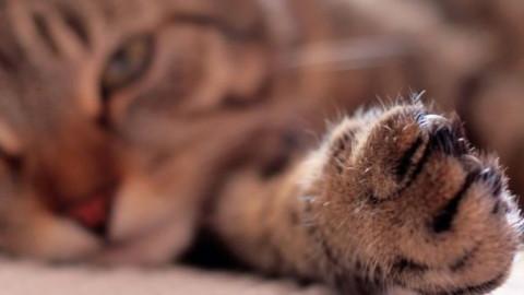 Non solo gli uomini, anche i gatti possono essere destri o mancini – Fidelity News