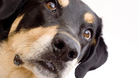 Bimba morsa dal cane a Bergamo: no all'abbattimento dell'animale