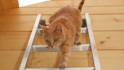 Scoprire se il gatto è mancino può aiutarti ad accudirlo meglio – La Repubblica