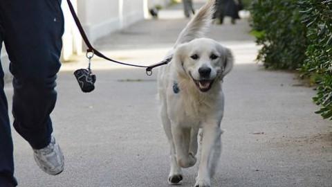 A spasso con il cane, la museruola diventa obbligatoria – Oggi Treviso