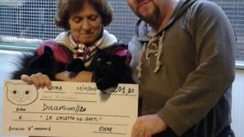 Storia del gatto nero dei VIP che raccoglie fondi per un gattile – Petpassion.tv