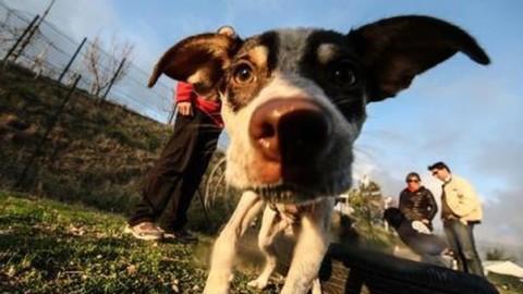 Mettere il collare anti-abbaio al cane è reato penale: maxi-multa al … – Corriere Adriatico