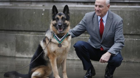 La Dickin medal assegnata postuma a Chips, cane Usa eroe dello … – Il Sole 24 Ore