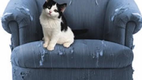 Gatti e dispetti, come educare un gatto dispettoso – MondoGatti.com (Blog)