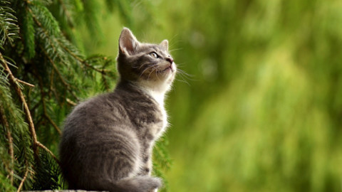 Gattoterapia: Come i Gatti ci Insegnano a Vivere Meglio – Eticamente.net