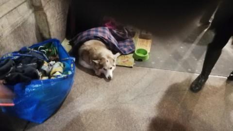 Accattonaggio: cani di strada, vittime sfruttate – Radio Colonna