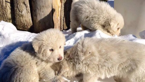 Rigopiano, un anno dopo: come stanno i cani salvati dalla tragedia – Velvet Pets