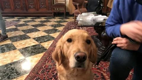 A Pescara si sperimenta il Progetto Serena, cani di allerta pediatrica … – IlPescara