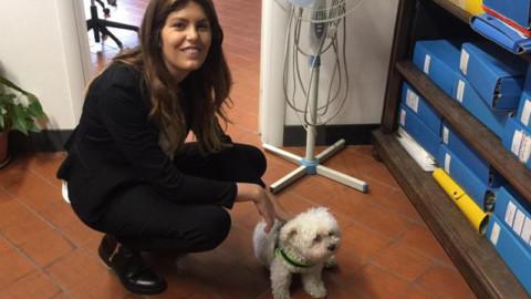 Genova, i cani dei dipendenti entrano in Comune (e presto nei … – Il Sole 24 Ore