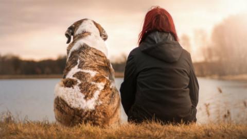 Preparatevi: è in arrivo un traduttore per parlare con cani e gatti – Galileo