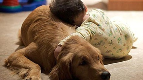 Cani e bambini. Ecco alcuni consigli utili per una serena convivenza … – Agenpress