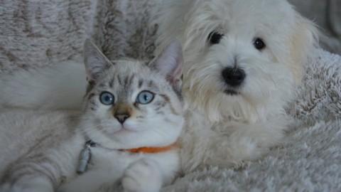 Affidamento del cane di famiglia in caso di separazione: a chi va e … – NanoPress