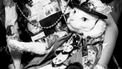 Cat People: il mondo dei gatti come non l'avete mai visto – Vanity Fair.it