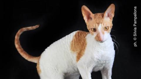 I gatti più belli del mondo alla Fiera di Padova – Corriere della Sera