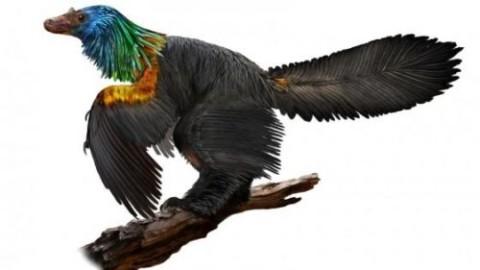 Dinosauro arcobaleno, il coloratissimo rettile scoperto in Cina – Scienzenotizie.it (Comunicati Stampa) (Blog)
