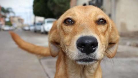 Montecastrilli, accordo tra Comune e Wwf per l'affido dei cani randagi – CITY JOURNAL (Comunicati Stampa)