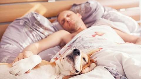 1 italiano su 2 condivide il letto con cani e gatti: il nuovo rapporto … – greenMe.it