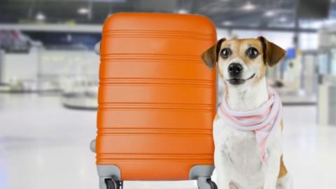 EasyJet inventa il pet sitter a domicilio – Vanity Fair.it