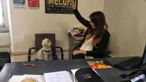 Cani in ufficio, una novità che divide il web – GenovaToday