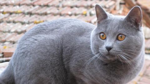 Oltre 600 gatti all'Esposizione internazionale felina di Lucca – gonews