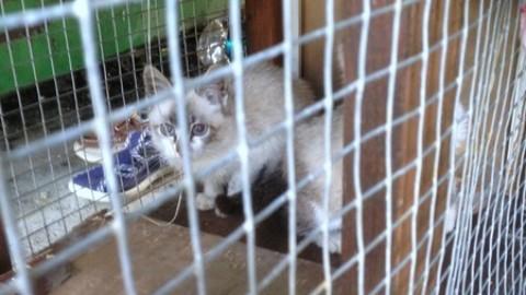 Enrica, da 28 anni in aiuto ai gatti di strada, orfani e mutilati – TargatoCn.it