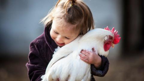 Gallina e pollaio nell'evoluzione del rapporto tra uomo e animale … – Tuttosullegalline.it (Blog)