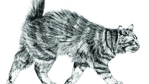 Vite da gatti come le nostre – Il Sole 24 Ore