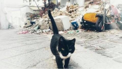 """Il grido dalla Zona Rossa: """"Hanno rubato e brutalizzato i nostri gatti"""" – Il Dispari Quotidiano (Comunicati Stampa) (Blog)"""
