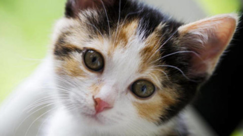 """""""I gatti più belli del mondo"""" a Scanzorosciate – BergamoNews.it"""