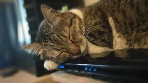 Dieci segnali per capire che il nostro gatto ci ama – Riviera24