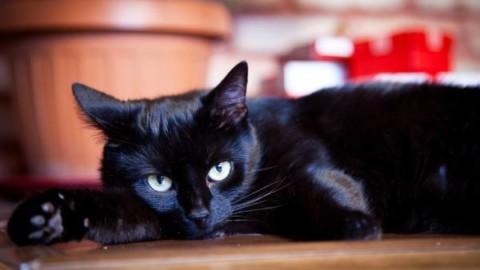 Gatto nero: storia della superstizione (e perché invece porta fortuna!) – greenMe.it