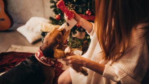 Amici pelosi in festa: il Natale degli animali domestici – Stile.it