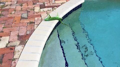 "USA: freddo estremo sulla East Coast, in Florida ""piovono iguane … – Meteo Web"