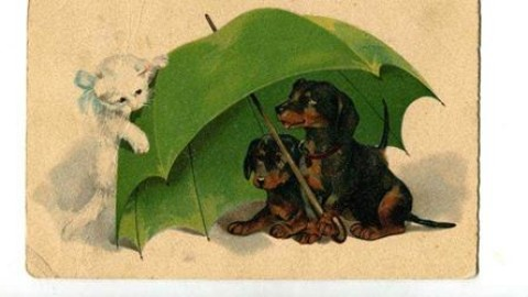 Gatti da cartolina in mostra a Trieste – Il Friuli