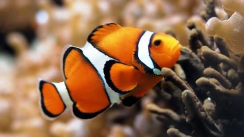 """""""Maschio o femmina?"""": come la biologia, l'ambiente e la cultura … – Scienze Naturali"""