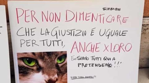 """Garage degli orrori, assolto il presunto torturatore dei gatti. Lav: """"Noi … – PerugiaToday"""