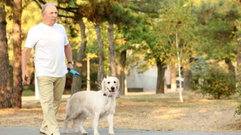 Anziani e animali domestici: una relazione benefica – Io Donna