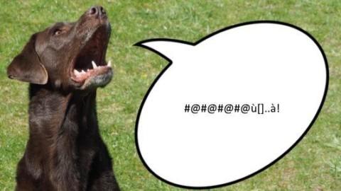 Tradurre il linguaggio di cani e gatti in inglese? Entro il 2022 sarà … – greenMe.it