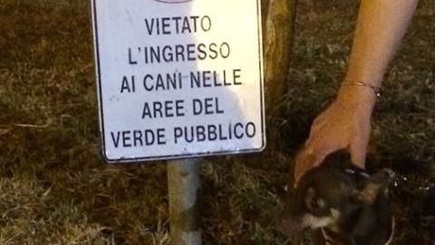 2018: l'anno del cane – Oggi Treviso