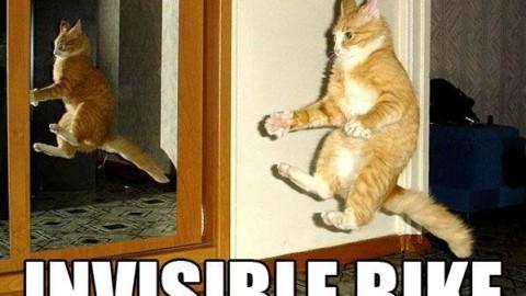 10 meme storici di gatti nel World Cat Day – Smartworld