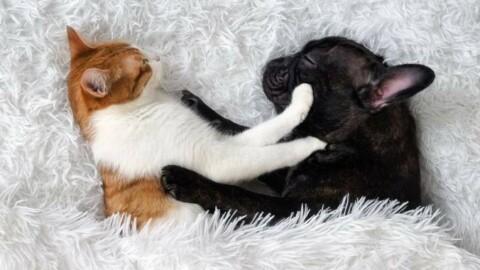 San Valentino. C'è chi preferisce una notte con il cagnolino a quella … – Quotidiano.net